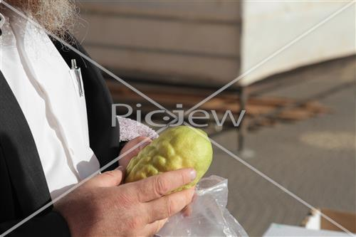 Checking etrog