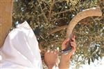 Shofar blowing a ram's horn