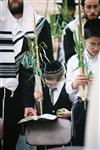Gigantic Lulav and Etrog